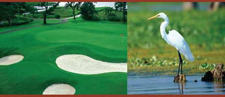 photo of the golf course and a great egret at Stono Ferry